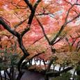 秋の清水にて